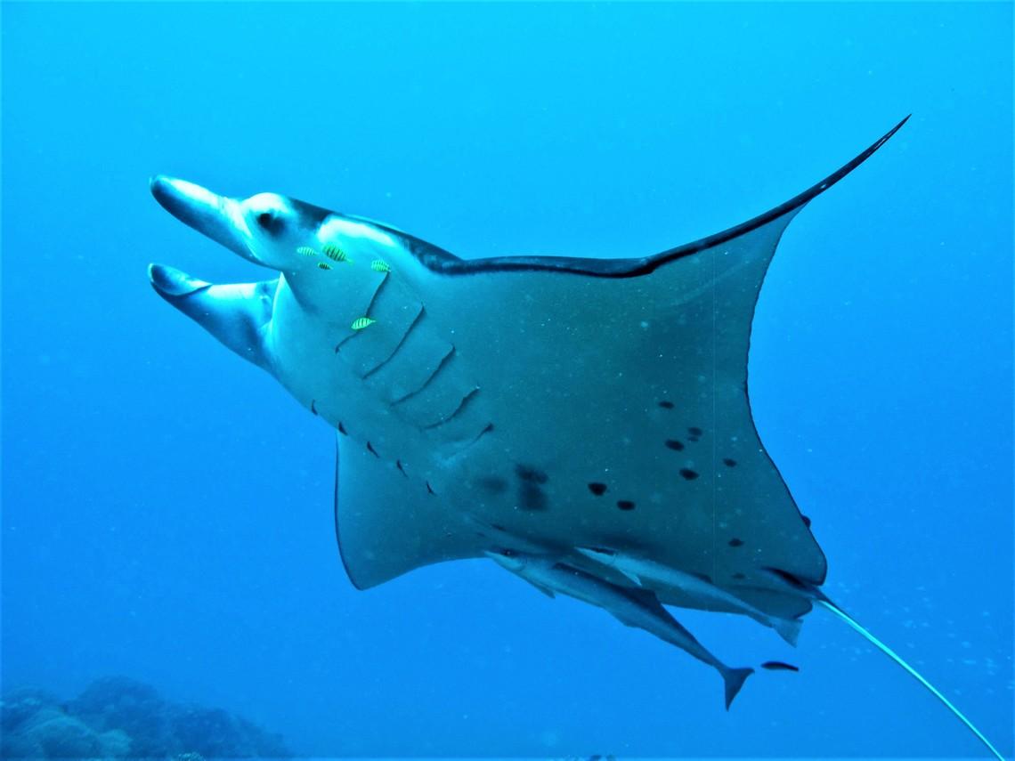 https://tahititourisme.kr/wp-content/uploads/2017/08/Bora-Bora-Reef-Discovery-3.jpg