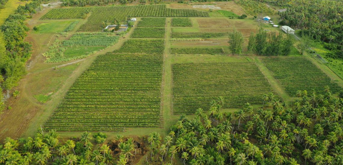 https://tahititourisme.kr/wp-content/uploads/2017/08/Vin-de-Tahiti_1140x550-min.png