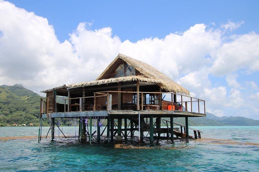 https://tahititourisme.kr/wp-content/uploads/2017/08/pearl-farm-house-or-hut.jpg