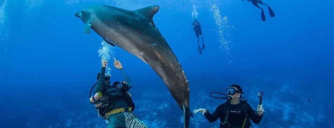 https://tahititourisme.kr/wp-content/uploads/2017/10/Rangiroa-Diving-Center-1150x440px.jpg