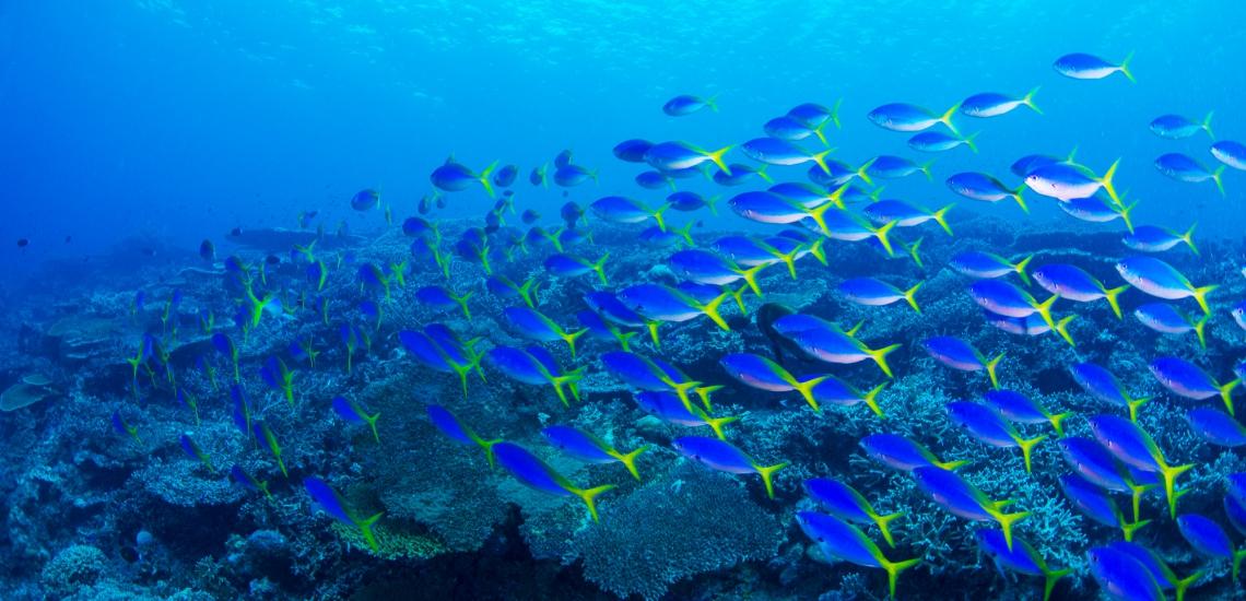 https://tahititourisme.kr/wp-content/uploads/2018/01/FRNT_39_Diving.jpg