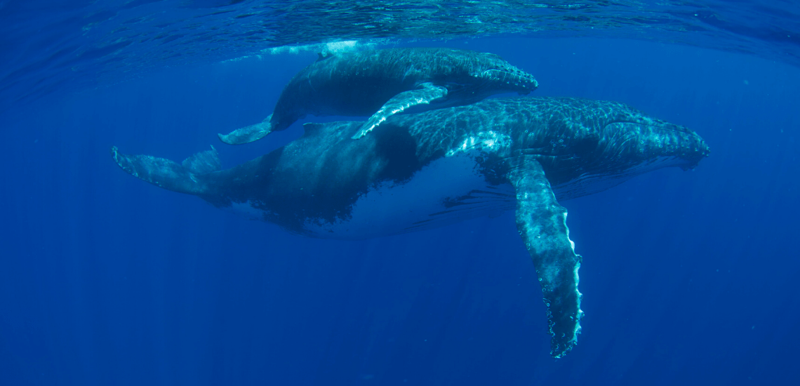 https://tahititourisme.kr/wp-content/uploads/2018/03/mooreaactivitiescenterwhaleswatching_1140x550-min.png