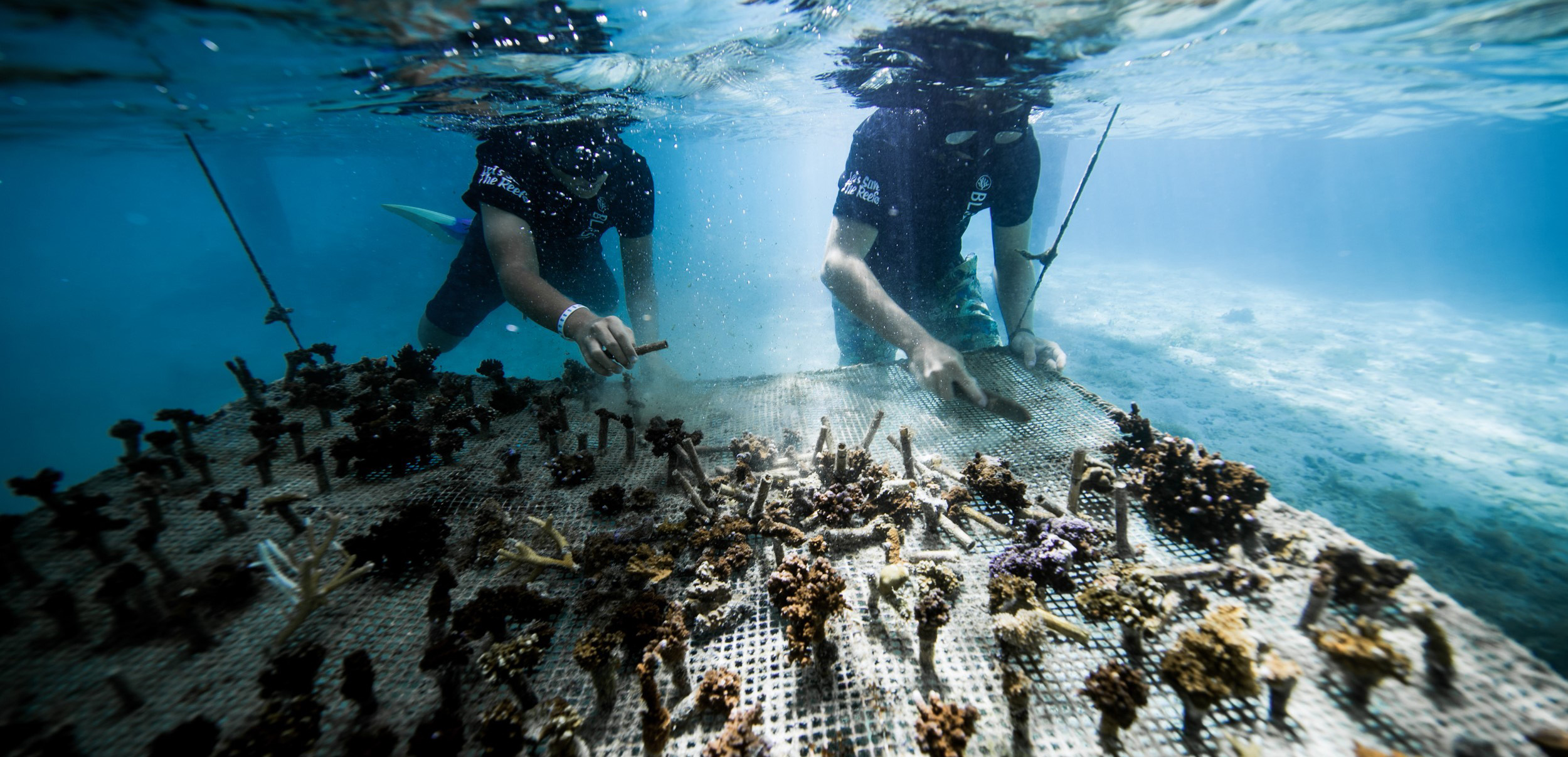 https://tahititourisme.kr/wp-content/uploads/2018/11/CoralGardeners-couv.jpg
