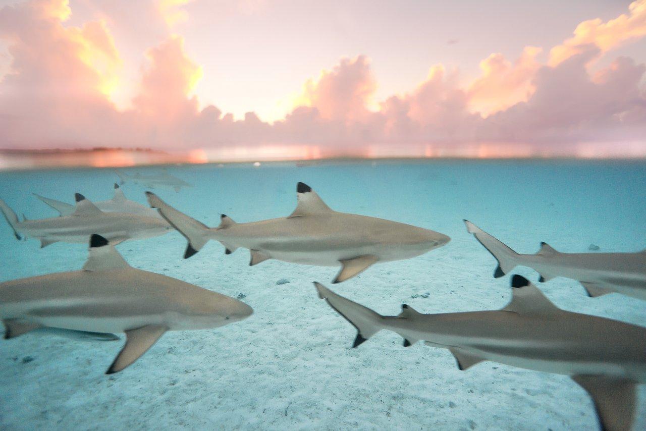 https://tahititourisme.kr/wp-content/uploads/2020/06/blacktip-reef-shark-sunset.jpg