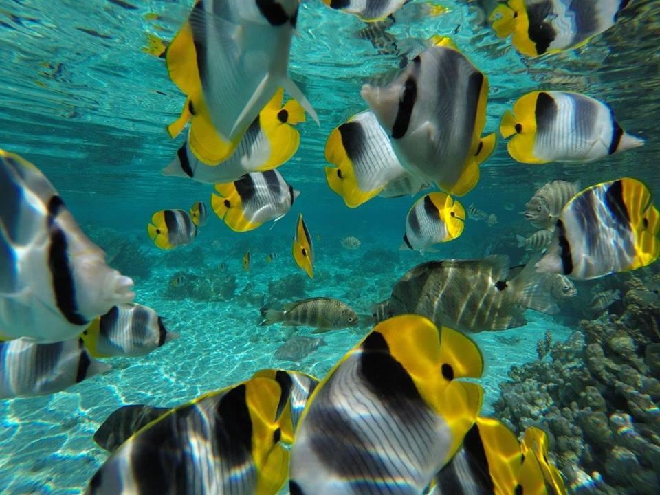 https://tahititourisme.kr/wp-content/uploads/2020/06/jardin-corail-tahaa-5.jpg
