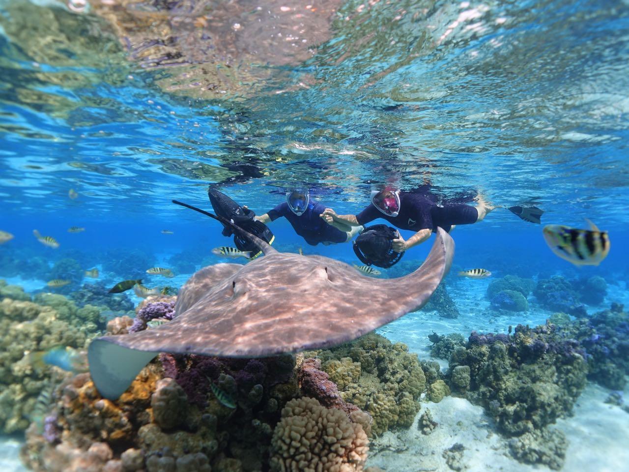 https://tahititourisme.kr/wp-content/uploads/2020/09/Sea-Scooter-Snorkeling-Tour-à-moorea-copie-2.jpg