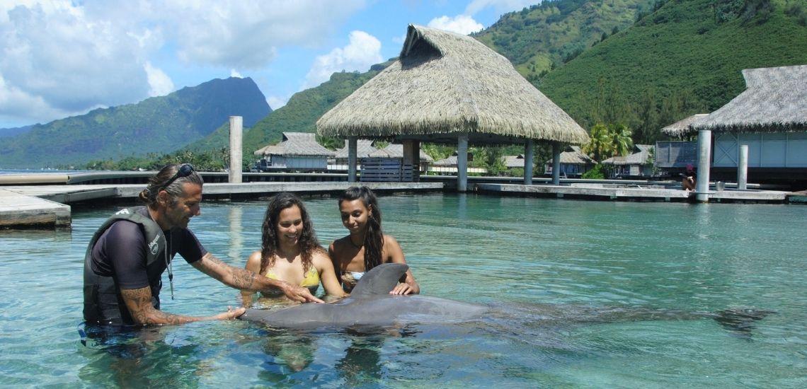 https://tahititourisme.kr/wp-content/uploads/2021/01/Offre_Moorea-Dolphin-Center.jpg